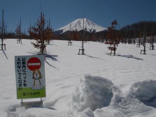 s富士散策公園DSCN9044.jpg